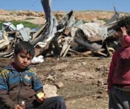 Palestine: Dozens of homes demolished, Olive trees uprooted