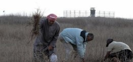 Palestine: Israeli forces open fire on Gaza farmlands