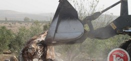 Palestine: Israeli army demolishes barn, tent near Ramallah