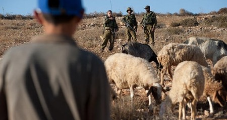 Palestine: Israeli settlers continue to attack Palestinian shepherds