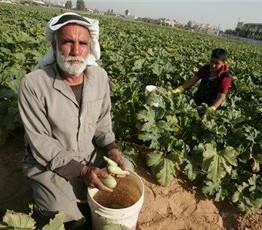 Palestine: Damage to Gaza agriculture will have long-lasting effects