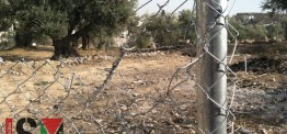 Palestine: Israeli settlers destroy Palestinian property under protection of Israeli soldiers