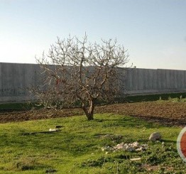 Palestine: Israeli army confiscates dozens of dunams of Palestinian lands