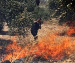 Palestine: Israeli settlers burn Olive trees west of Bethlehem