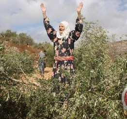 Palestine: Israeli settlers vandalize Palestinian-owned orchards near Hebron
